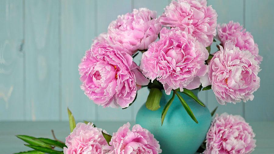 แจกันดอกเหมย สวยงามอย่างมีคุณค่า